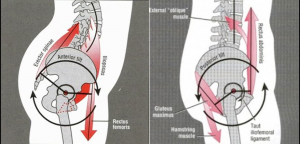 Tight Psoas can cause back pain